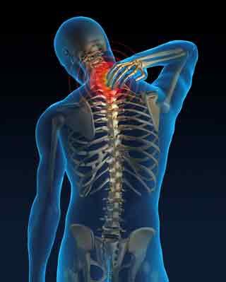 x ray of skeleton